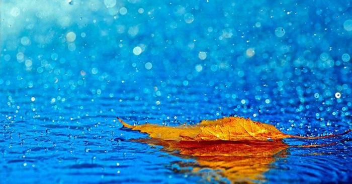 blog radio, Ngóng trông một mùa mưa
