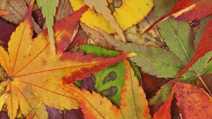 Xếp lại mùa thu