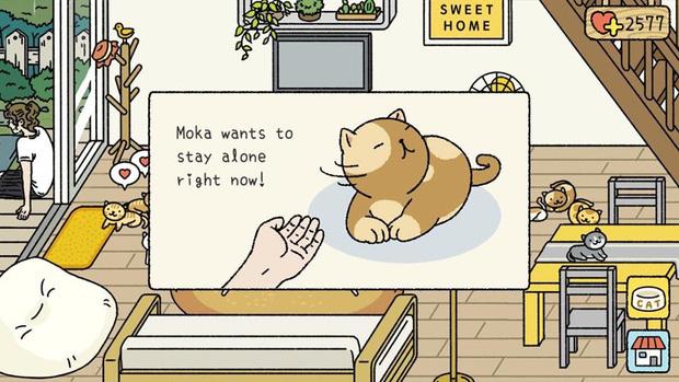 Phận làm sen ngoài đời đã khổ, lên Adorable Home chơi mới biết thế nào là suy nhược vì sự... chảnh mèo