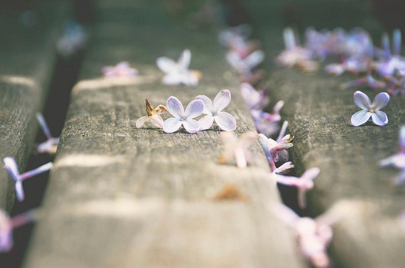 Sau này hãy gặp lại nhau vào mùa hoa nở nhé