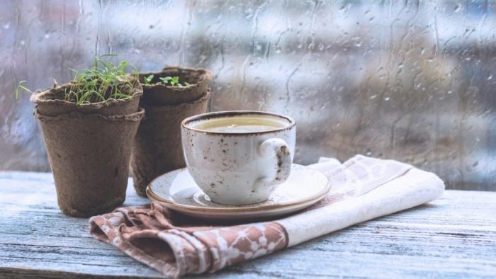 cafemua-mua