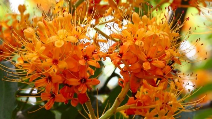 những-loài-hoa-màu-cam-rực-rỡ-hoa-vàng-anh-1024x659