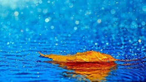 Ngóng trông một mùa mưa