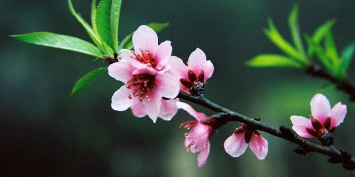 Mùa xuân hãy đến chậm một chút