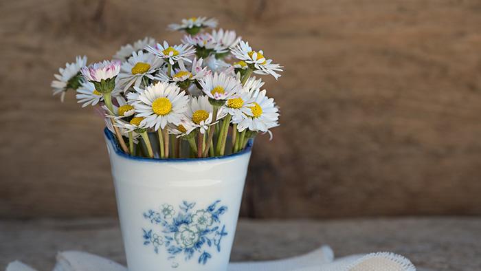 Bình hoa yêu thích tiết lộ nơi thích hợp để bạn toả sáng