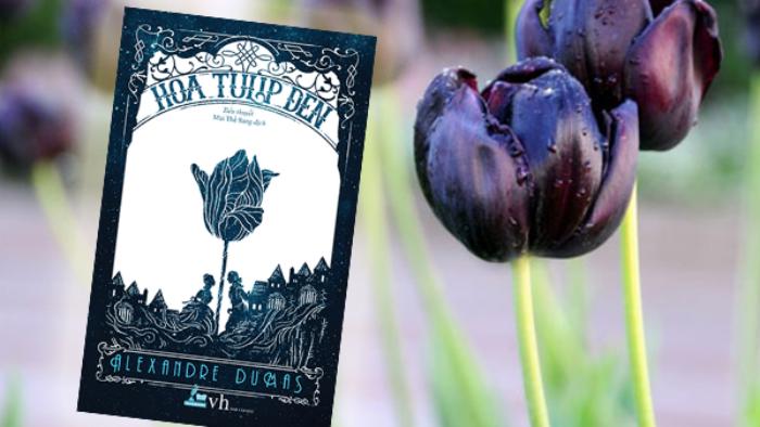 Hoa tulip đen - bài ca tình yêu tuyệt diệu của Alexandre Dumas
