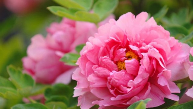 Một nhành hoa tháng ba