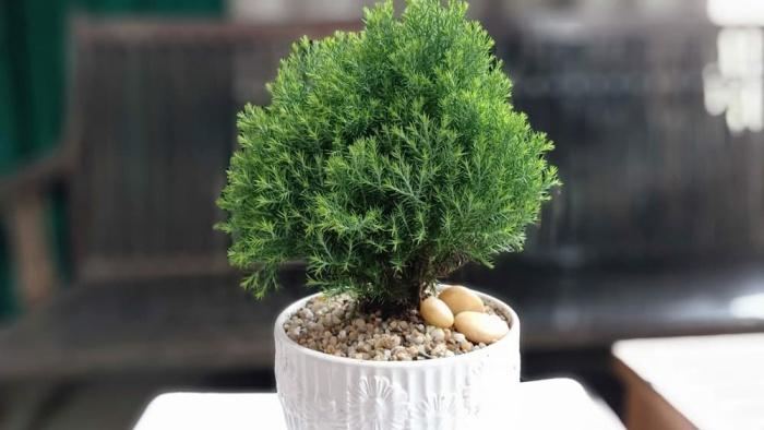 7 cây phong thủy xua đuổi tà khí ai cũng nên trồng ít nhất một cây trong nhà