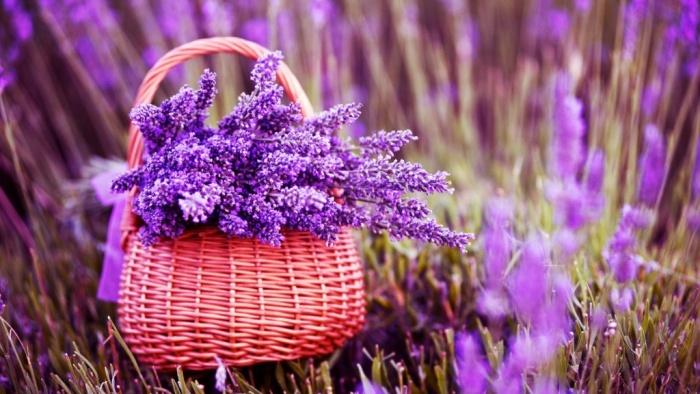 Thương nhớ mùa oải hương