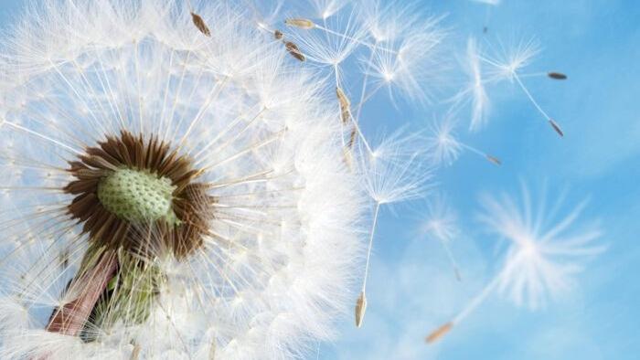 Một ngày nắng nở hoa