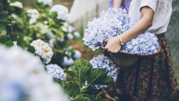 Đà Lạt - những mùa hoa trở lại trong tim tôi