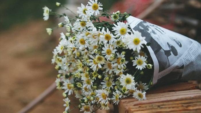 Tôi gửi thư cho em gói bằng mùi hoa cúc